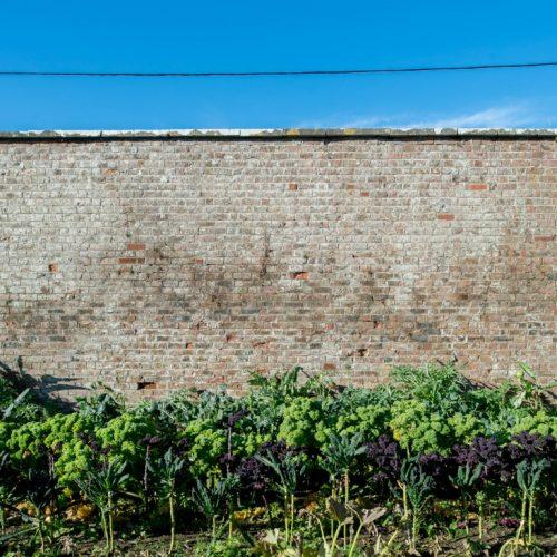Kale Gardens