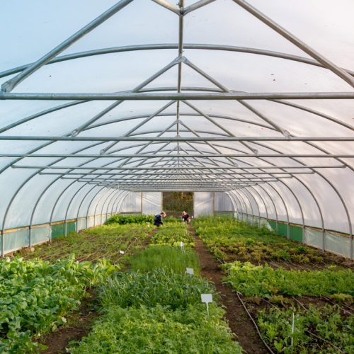 The Polytunnel