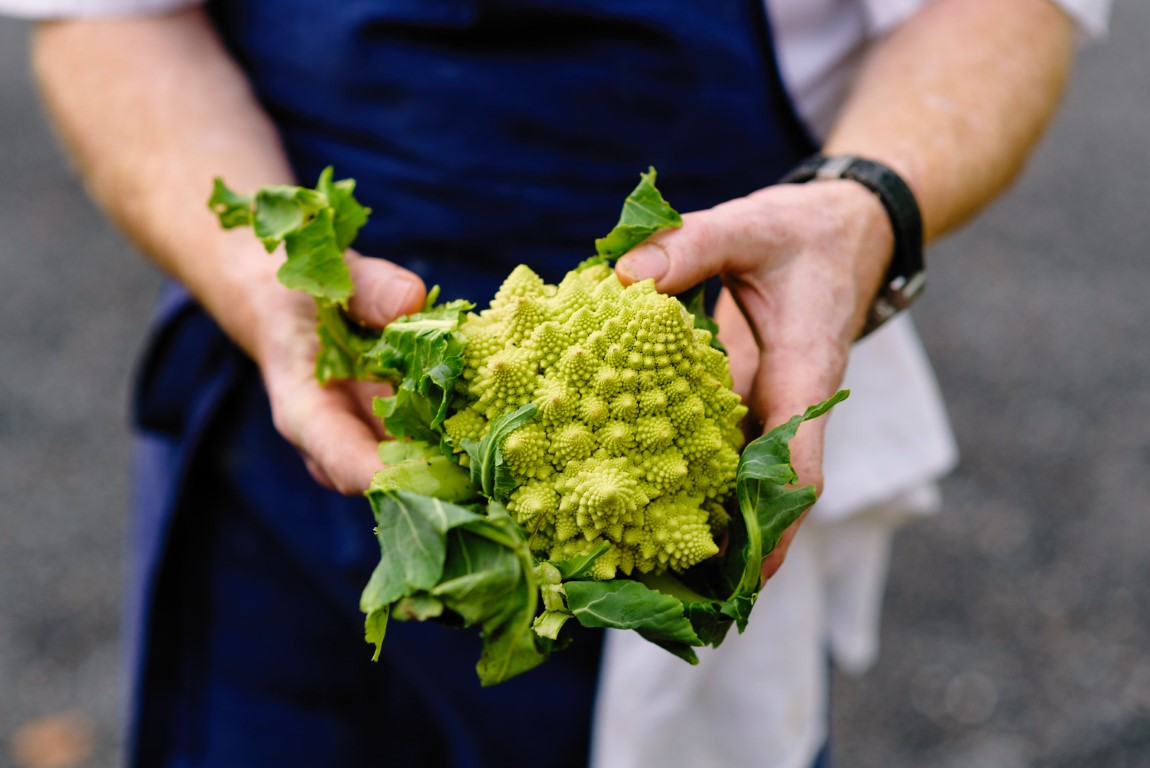 Veronica romanesco
